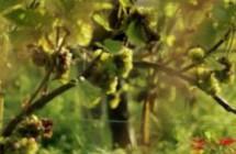 Weinland-Sachsen-Trailer